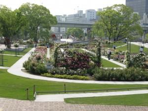中之島公園の薔薇