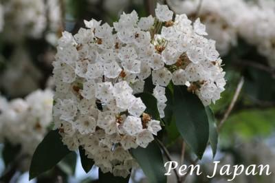 花博記念公園鶴見緑地の花