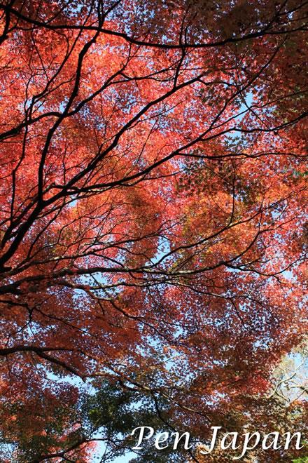 若草山の近くの紅葉