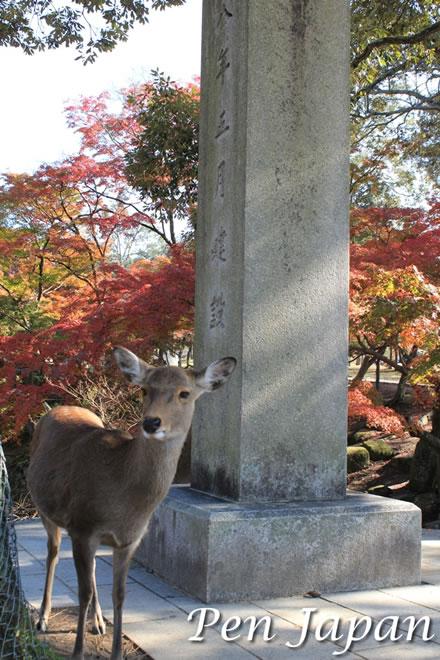 奈良公園_東大寺の近くの紅葉と鹿