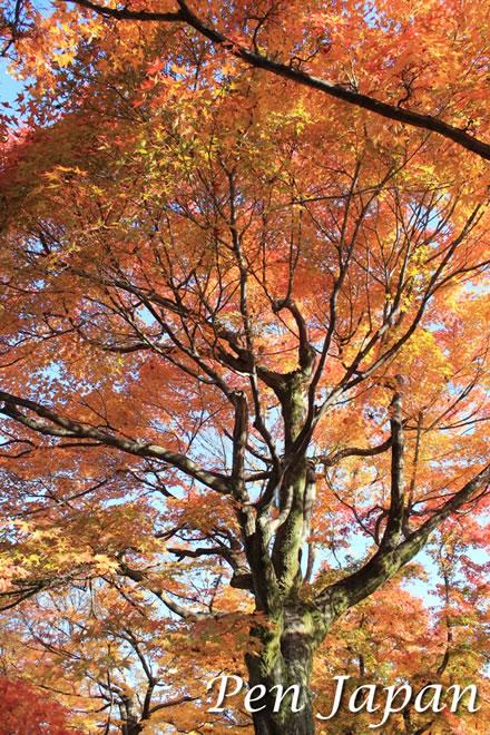 東福寺_洗玉澗の紅葉