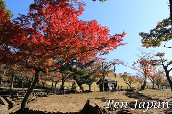 奈良公園_若草山の紅葉
