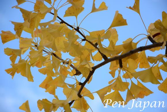 城北公園の紅葉