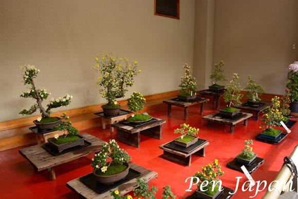 城北公園の菊花展