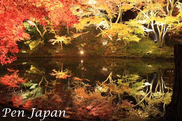 高台寺のライトアップされた紅葉