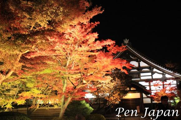 高台寺のライトアップした紅葉