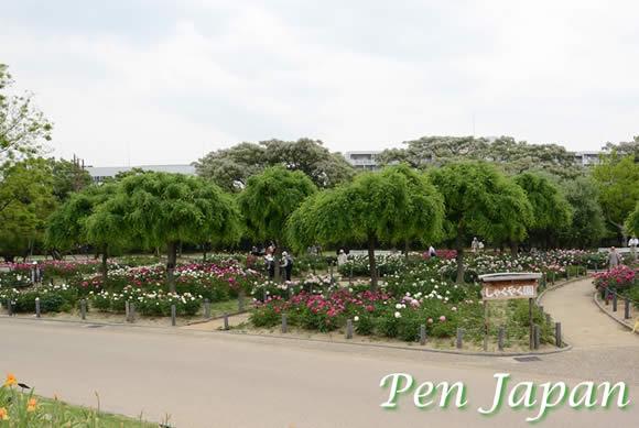 長居植物園の芍薬園