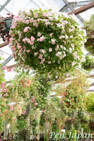 神戸どうぶつ王国の花