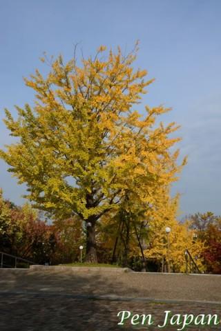 花博記念公園の紅葉