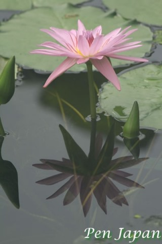 咲くやこの花館の花の花