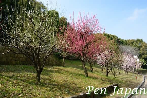 花博記念公園の梅林