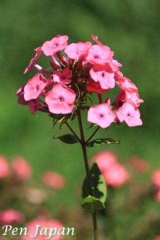 万博記念公園の夏の花八景