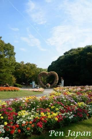 長居植物園の秋の花