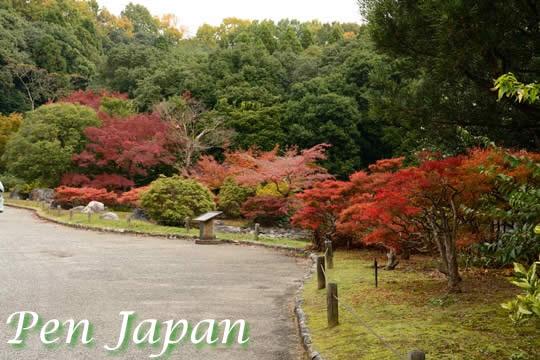 万博記念公園(日本庭園)の紅葉