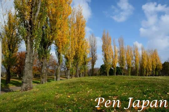 花博記念公園鶴見緑地の紅葉