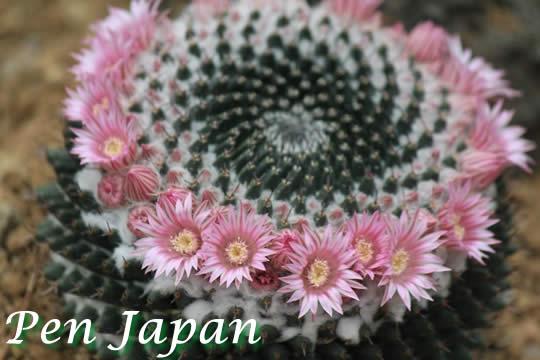 咲くやこの花館のサボテン