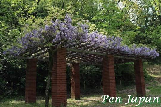 私市植物園のフジ棚