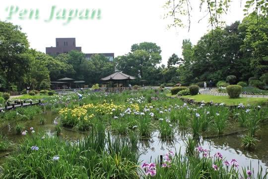 城北公園・菖蒲園