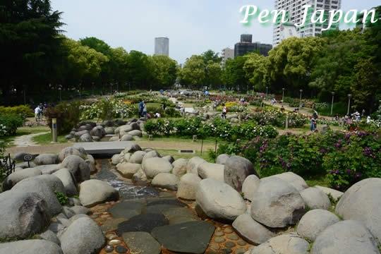靭公園のバラ園