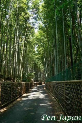 向日市の竹の径