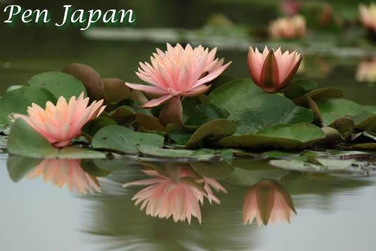 花博記念公園鶴見緑地の睡蓮