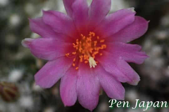 咲くやこの花館に咲く花
