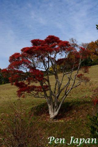 万博記念公園・日本庭園の紅葉