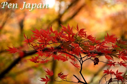 私市植物園の紅葉