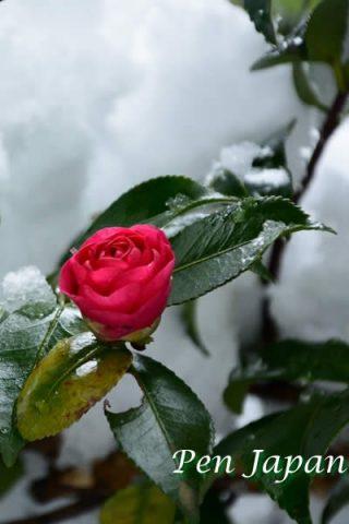 京都・大原の雪景色