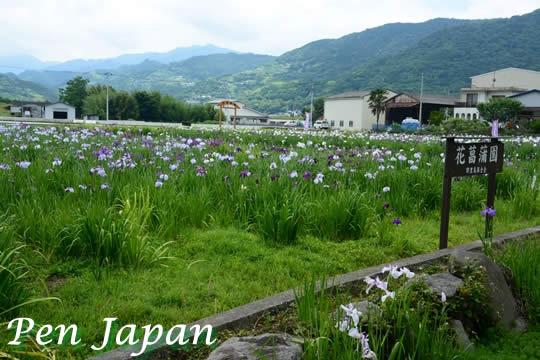 美馬寺町の花しょうぶ