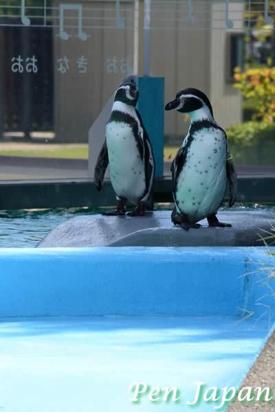 とくしま動植物園のペンギン