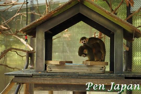とくしま動植物園のリスザル