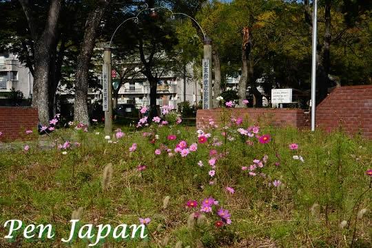 ドイツ村公園とコスモス(秋桜)