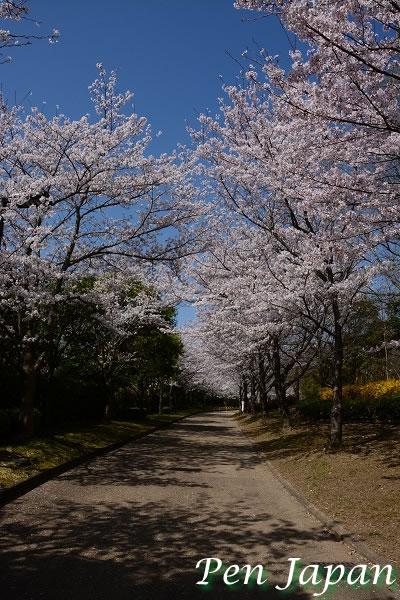 あすたむらんど徳島の桜