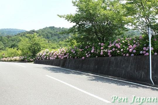 熊谷寺の紫陽花