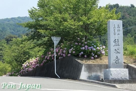 熊谷寺と紫陽花