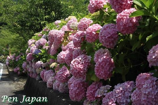 熊谷寺のあじさい