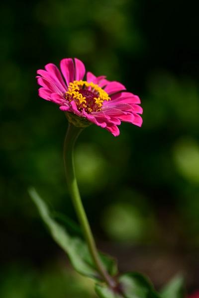 あすたむらんど徳島に咲く花