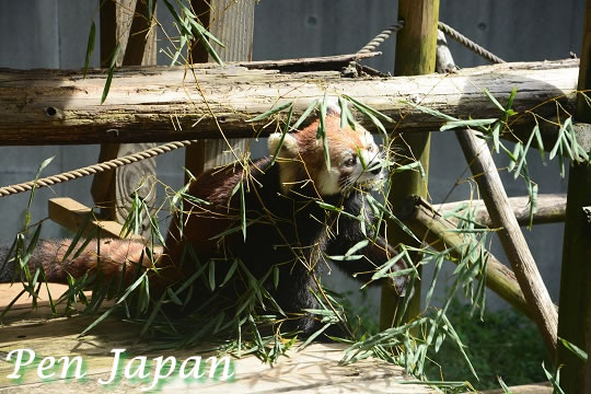 とくしま動物園