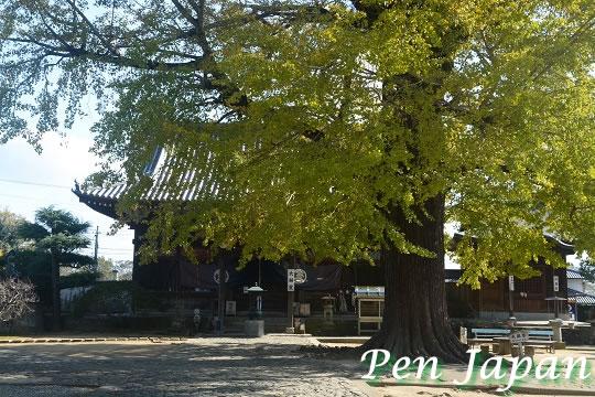 地蔵寺の大銀杏